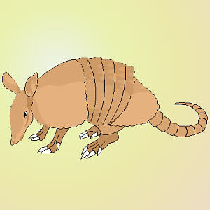 full color armadillo drawing